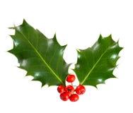 Holly jagody liść i Obraz Stock