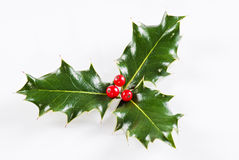Holly leaf with red berries Royalty Free Stock Images
