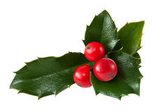 Holly Leaf and redberry Stock Image