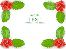 Holly leaves and berrie Stock Image