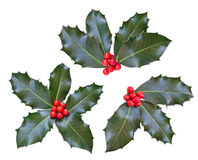 Holly leaves and berries Stock Photography