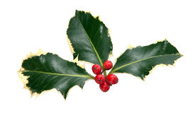 Holly leaves and berries Royalty Free Stock Photography