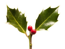 Holly leaves and berries Royalty Free Stock Images