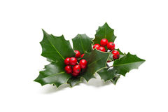 Holly leaves and berries. European Holly (Ilex aquifolium) leaves and fruit stock photos