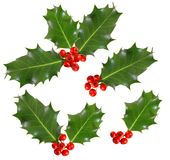 Holly leaves and berries. Isolated on white background Royalty Free Stock Photos