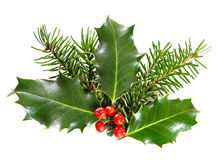 Holly leaves and berries Royalty Free Stock Photos