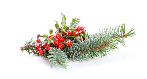 Holly leaves and berries with a pine branch Royalty Free Stock Photos