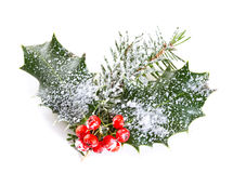 Holly leaves and berries Royalty Free Stock Image