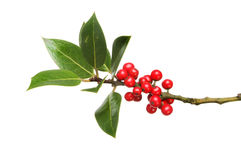 Holly leaves and berries stock images