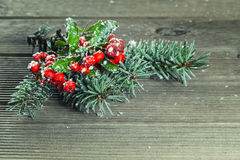 Holly leaves and berries Stock Photos