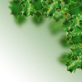 Holly leaves Stock Image