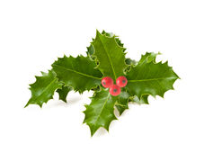 Holly leaves Stock Photos