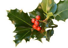 Holly leaves with red berries Stock Photo
