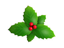 Holly leaves and red berry. Isolated on white background vector illustration