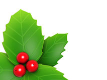 Holly leaves and red berry Royalty Free Stock Photos