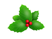 Holly leaves and red berry Royalty Free Stock Images