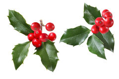 Holly Leaves Set Stock Photography