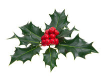 Holly leaves. Holly tradition to decorate Christmas Royalty Free Stock Photography