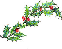 Holly Leaves Watercolor Imagem de Stock