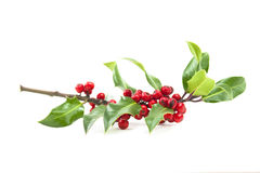 Holly and red berries Stock Photos