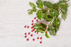 Holly and red berries Stock Images