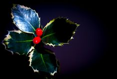 Holly with red christmas berries royalty free stock image