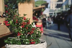 Holly on sale in a christmas market royalty free stock photos