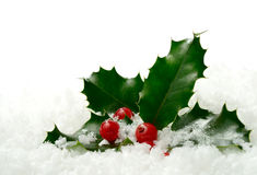 Holly in the snow. Studio macro of fresh holly leaves and berries in soft snow. Copy space stock photos