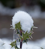 Holly Snow Cone royalty free stock photography