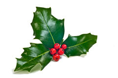 Holly sprig. Sprig of fresh holly with glossy green leaves and vivid red berries stock photography