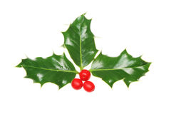 Holly sprig. Sprig of holly with berries on white stock images