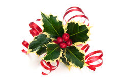Holly. Sprig of holly with berries and ribbon isolated on a white background royalty free stock photo
