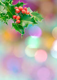 Holly Sprig Royalty Free Stock Photos