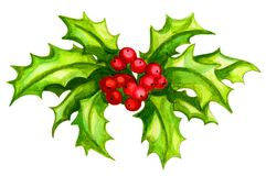 Holly Sprig Watercolor stock illustration