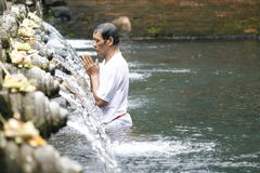 Holly springs in Balinese Tirta Empul Temple Royalty Free Stock Photos