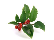Holly. Sweet xmas: holly on white background royalty free stock photography