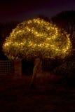 Holly Tree Illuminated by Christmas Lights Royalty Free Stock Photography