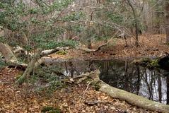 Holly Tree At Pond Edge Royaltyfria Foton