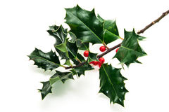 Holly twig. On white background Royalty Free Stock Photos