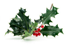Holly twig Royalty Free Stock Photo