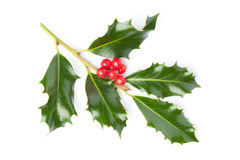 Holly twig Stock Images
