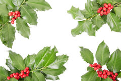 Holly twig border Stock Images