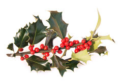 Holly twig with bright berries Royalty Free Stock Photo