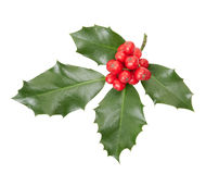 Holly twig, Christmas decoration Royalty Free Stock Photo
