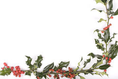 Holly twigs isolated on white. Background Royalty Free Stock Photography