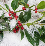 Holly twigs in the snow Stock Photography