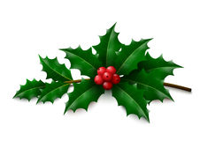 Holly on white background Stock Photography