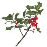 Holly z Czerwonymi jagodami pojedynczy białe tło Zdjęcia Stock