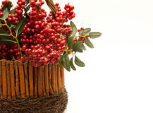 Hollyberry Centerpiece Royalty Free Stock Photo