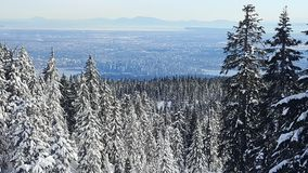 Hollyburn Giant point of view on Vancouver City. Landscape with beautiful big snowy firs trees, snow. Hiking in the national park reflexion with nature admire Stock Photo